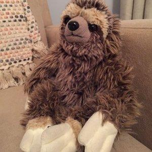 sloth_animal